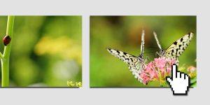 Los mejores efectos hover en imágenes